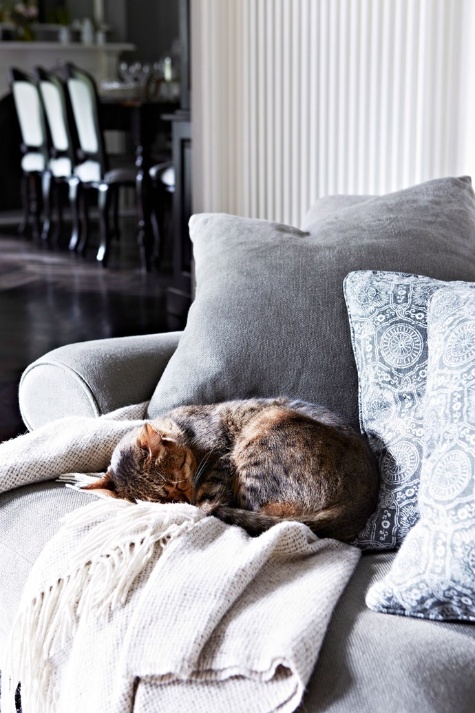 """Cats are happiest when they're stretched out on the best chair,"" says Rob Ingram. *Photo: Armelle Habib / bauersyndication.com.au*"