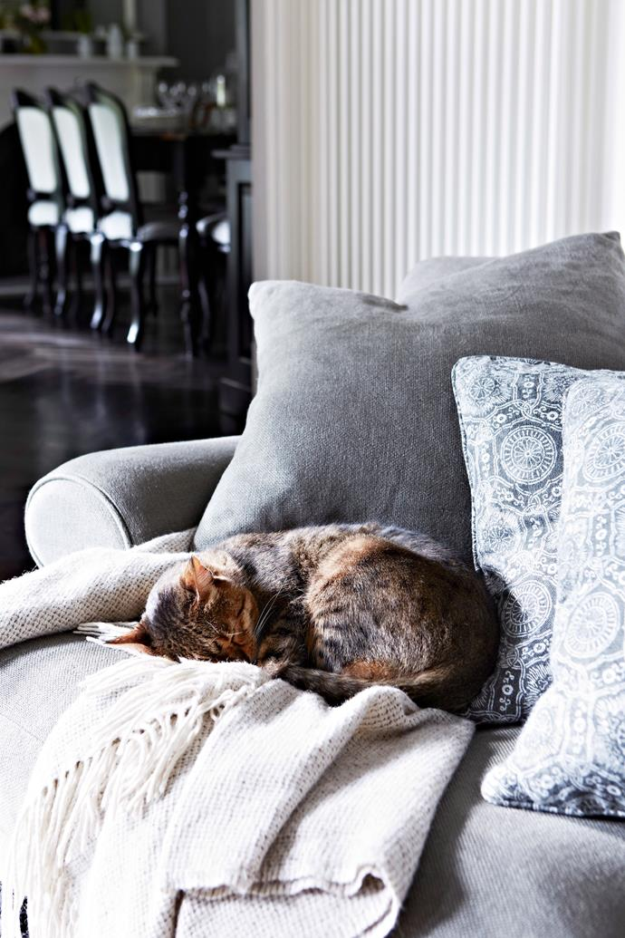 """""""Cats are happiest when they're stretched out on the best chair,"""" says Rob Ingram. *Photo: Armelle Habib / bauersyndication.com.au*"""