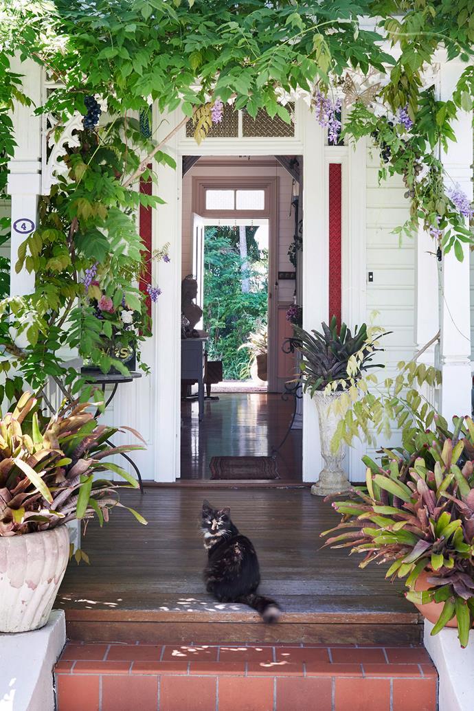 Cat: Where do you think you're going? *Photo: Alicia Taylor / bauersyndication.com.au*