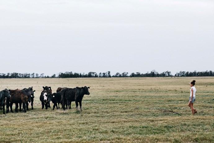 Matilda checks on the cattle.