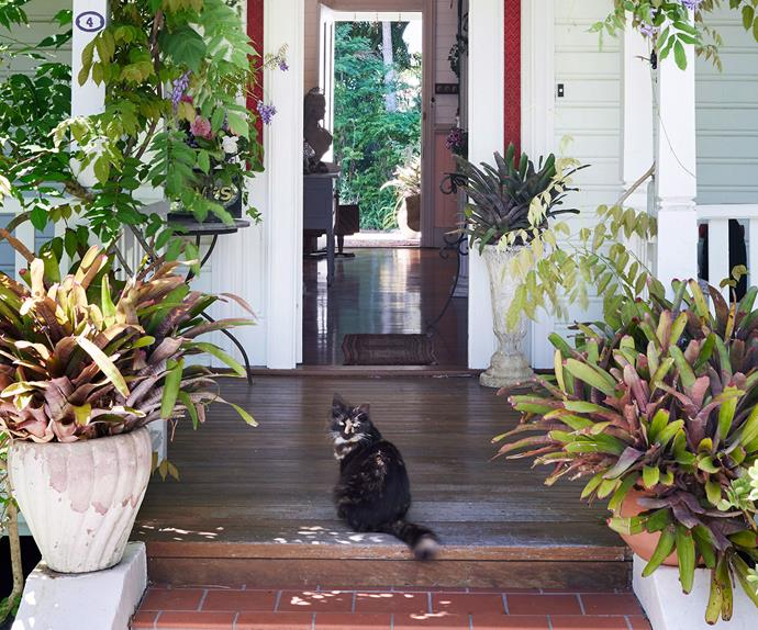 Cat on front step of home