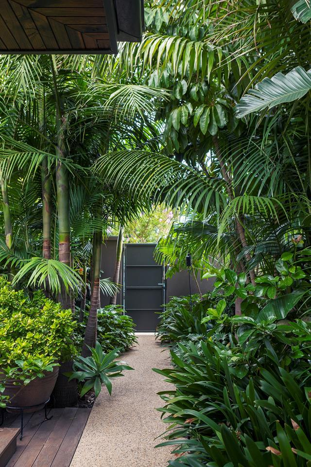 This tropical garden designed by landscaper John Couch is full of lush, emerald foliage that transports you to North Queensland or Bali. *Photograph*: Simon Griffiths.