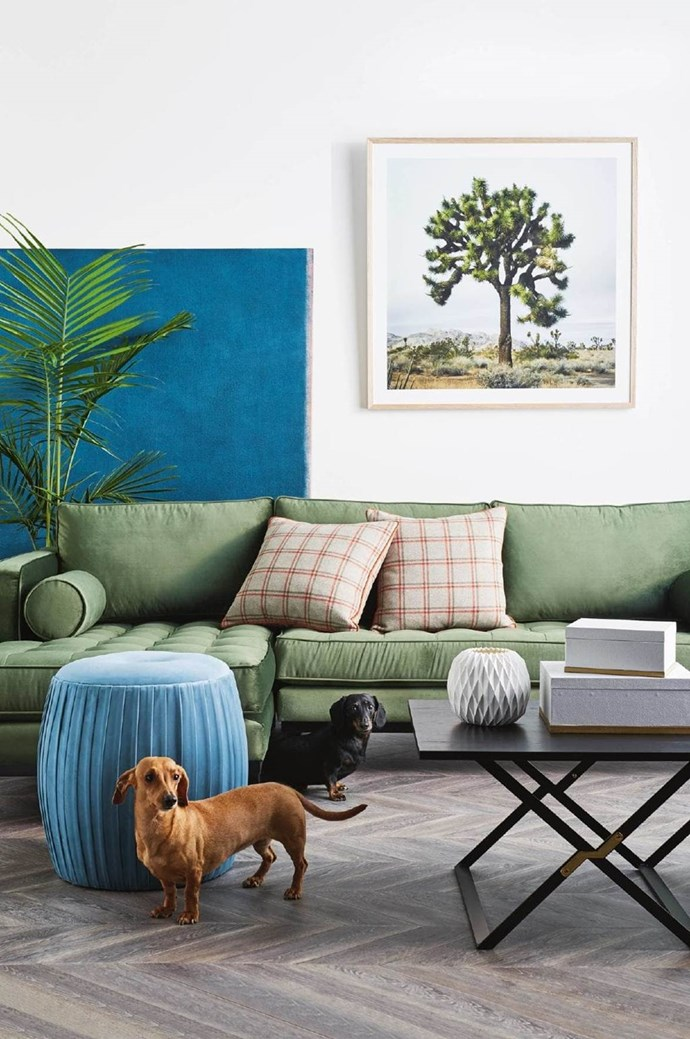 Penny & Roxy the Dachshunds meet mid-century modern. A pair of pint-sized sausage dogs matches a mix of contemporary style and timeless mid-century appeal. *Photograph*: Brett Stevens | *Stylist*: Matt Page | *Inside Out*