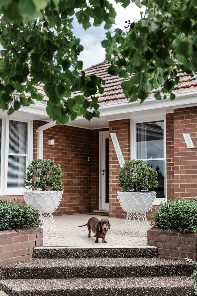 """Mortimer stands proudly out front of his renovated [art deco-style home](https://www.homestolove.com.au/art-deco-style-honoured-in-renovation-of-newcastle-home-6661