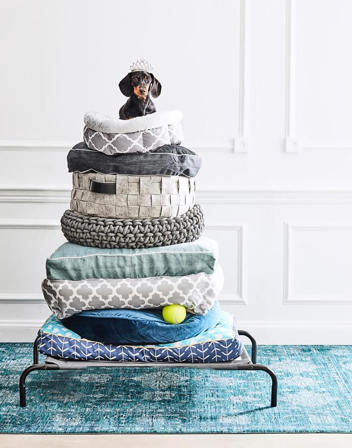 Otsa the mini dachshund showcases the most fashionable dog beds on the market. * Photograph*: Will Horner | *Styling*: Sophie Wilson | *Australian House & Garden*