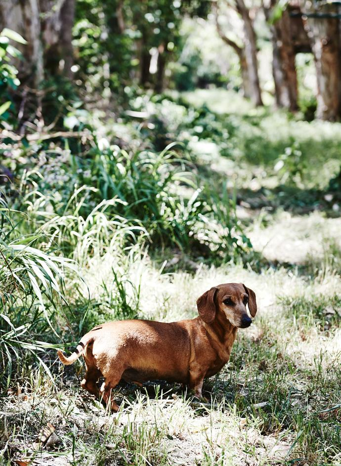 """Morris, or """"Morry"""" for short, loves to run and dig at South Golden Beach. *Photograph*: Lisa Cohen 