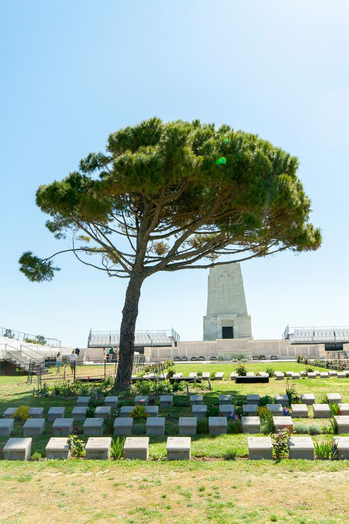 A pine tree in the Cemetery of Lone Pine, Gallipoli, the site of Austrailan Anzac Day dawn services. During the First World War, Turkish troops felled pine trees to build shelters. Only one pine remained, and the area became known as 'Lone Pine.' *Photo: Getty*