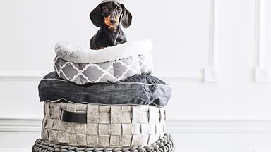 9 dachshunds in stylish spaces
