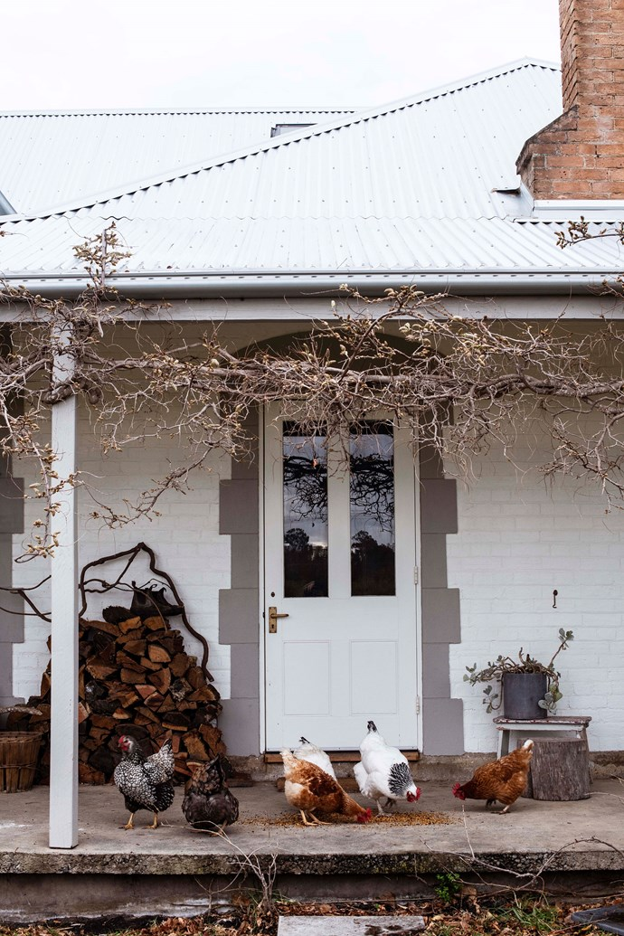 Jenny's chickens, pictured on the cottage's verandah, include a silver laced wyandotte and light Sussex hens.