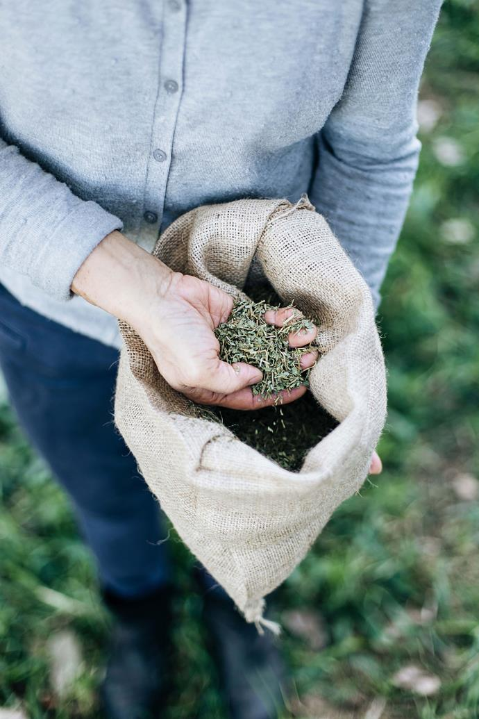 """Wyn Lower collecting organic gotu kola on her farm, Four Cow Farm. """"It's an ancient herb, believed to extend longevity as it's got such powerful anti-inflammatory properties,"""" explains Wyn's daughter-in-law Delphinia Tam-Lower."""
