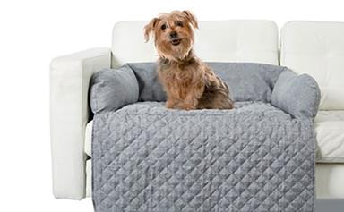 Kmart's best pet accessories from carriers to clothing