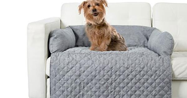 Kmart S Best Pet Accessories From Carriers To Clothing Homes To Love