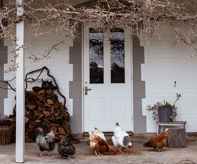 Chickens on the front verandah of a home in Milton NSW