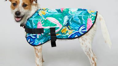 Gorman has released a new range of colourful coats – for your dog!