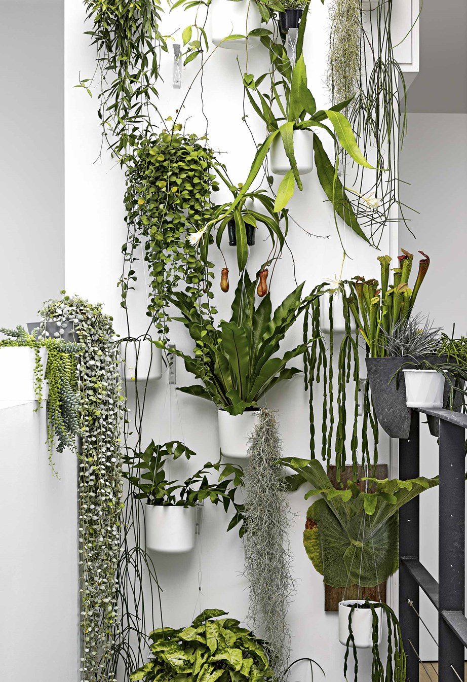 "Plants in pots keeps this green wall inside an [industrial apartment](https://www.homestolove.com.au/industrial-scandi-apartment-18187|target=""_blank"") contained making it easier to maintain."