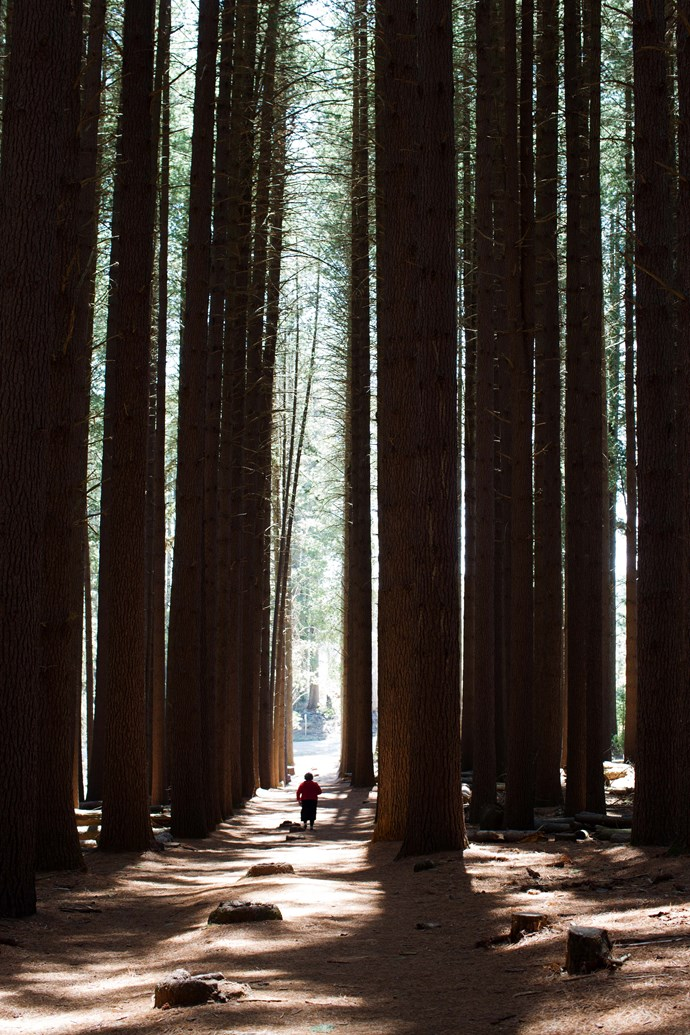 Find yourself dwarfed by the sugar pines at Laurel Hill.