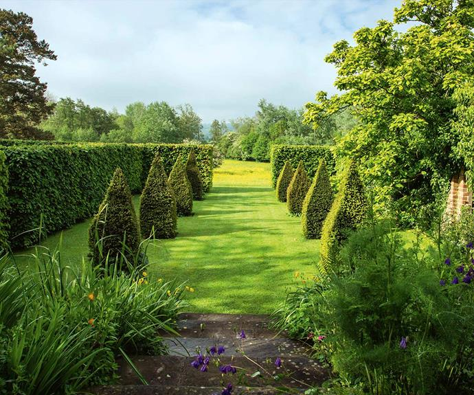 When pruning topiary, a wire guide may be required. *Photo: Claire Takacs*