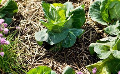 7 fast-growing vegetables