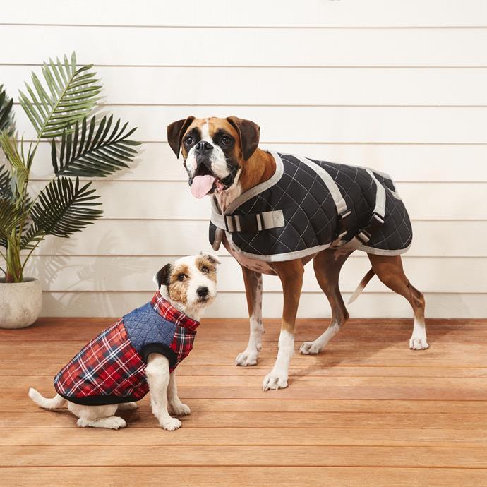 Dog Jacket, $9.99-$19.99.