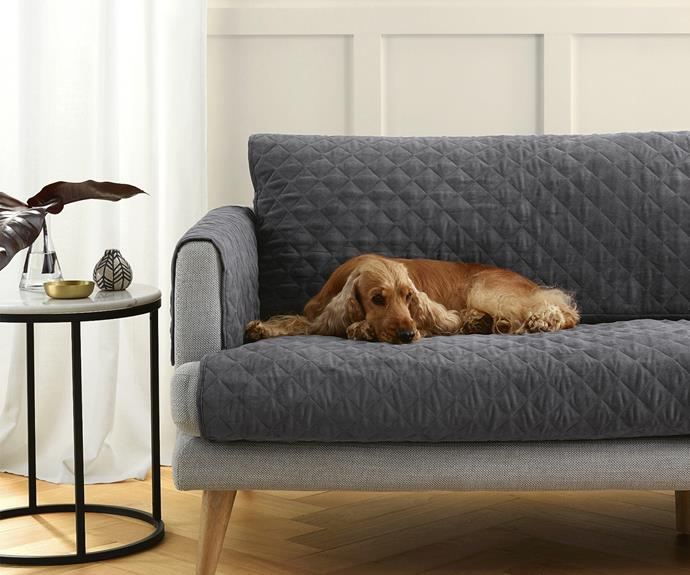 Aldi S Popular Pet Range Includes A Pet Couch Protector