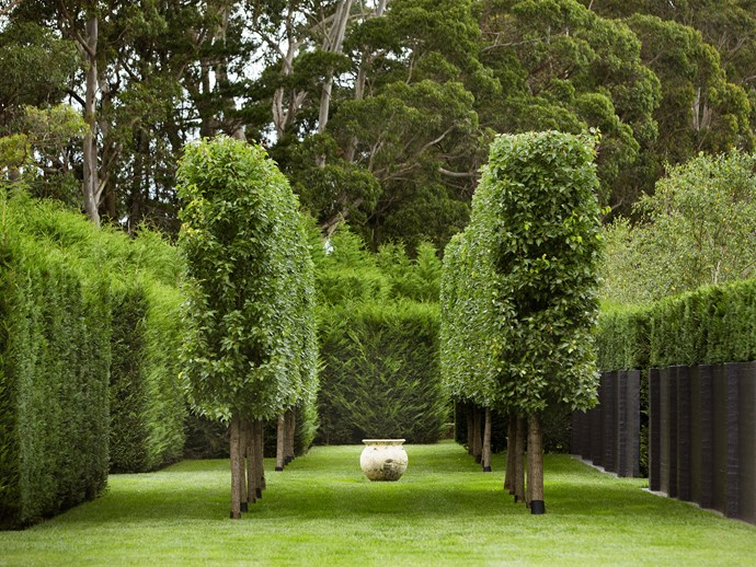 The garden is all about balance and restraint. Charcoal cube containers of topiary olive trees (Olea europaea cvs.) frame a water feature backed by star jasmine (Trachelospermum jasminoides).