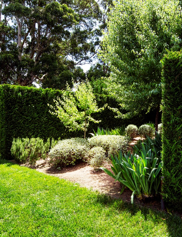 Contrast of colour, shape and texture is a feature of the garden.