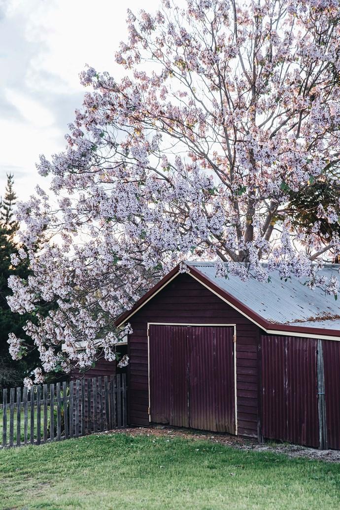 Pemberton in bloom.