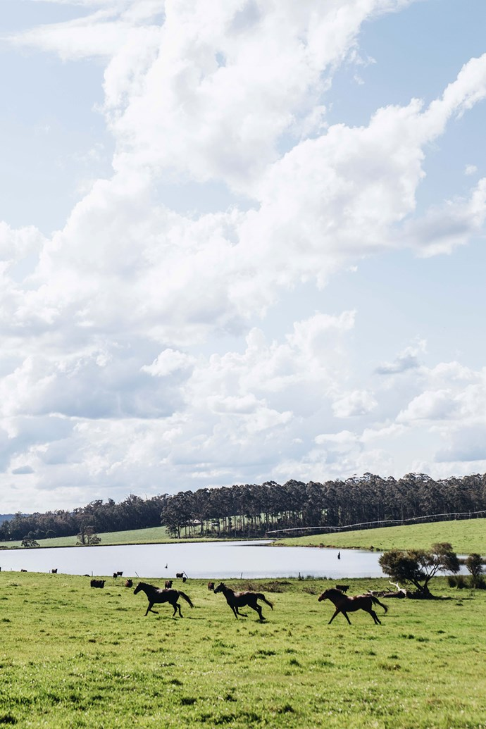 Horses at one of the area's vast farms.