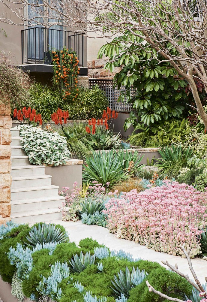 """While this lush front garden may not boast too many flowering plants, a rich mix of foliage in a range of different shades and silhouettes create a visually stunining effect. *Design: [Eckersley Garden Architecture](https://e-ga.com.au/