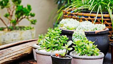 A beginner's guide to growing succulents