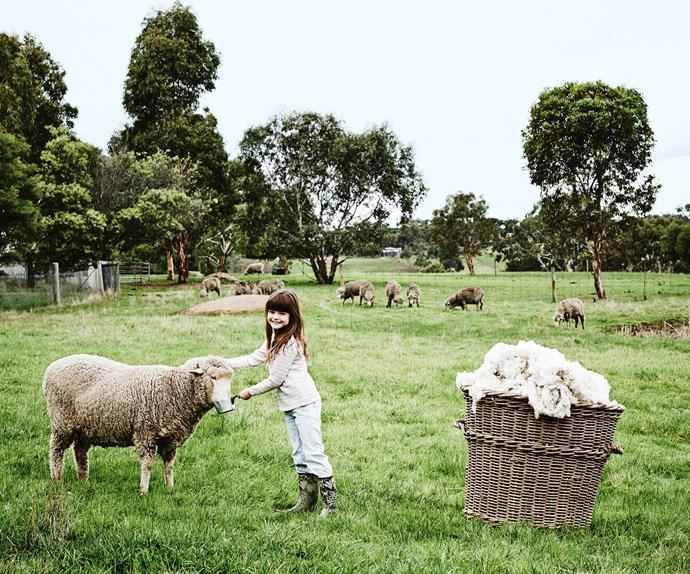 Girl with Merino sheep on a farm