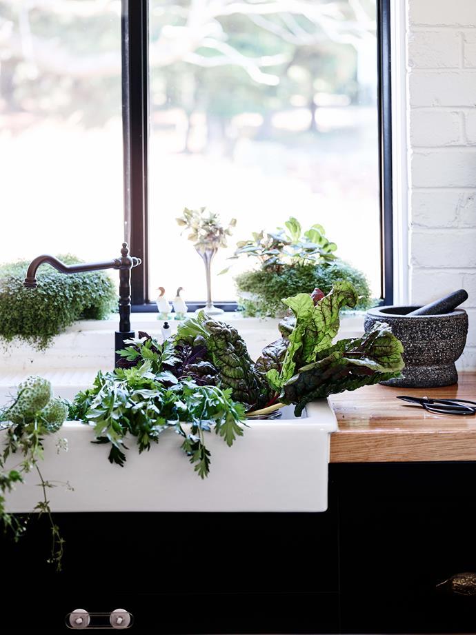 Freshly harvested vegetables in the kitchen sink.