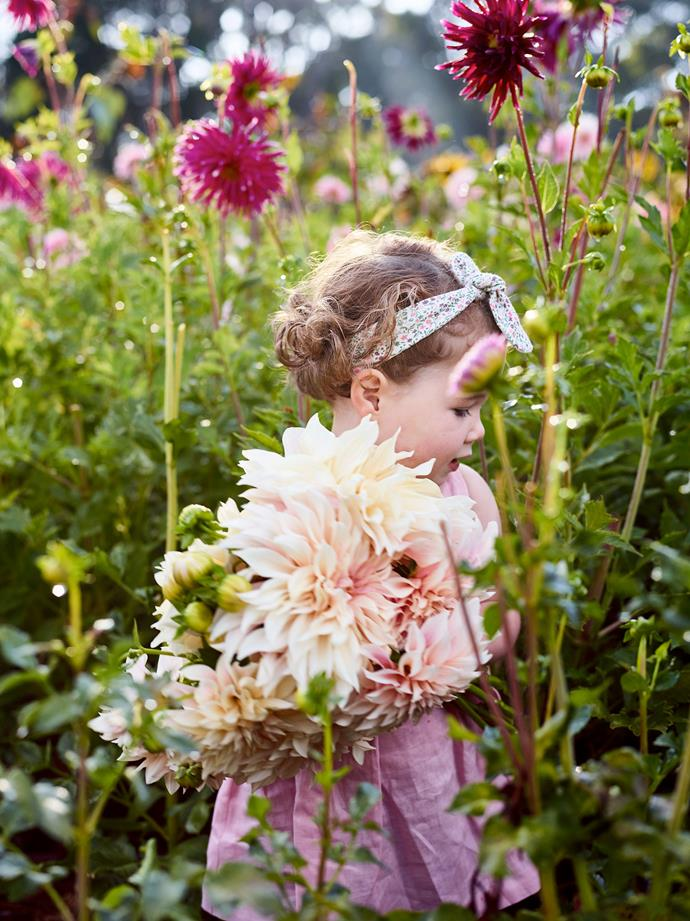 Three-year-old Gigi has her own secateurs and loves to cut flowers like this Cafe au Lait dahlia for her own posies