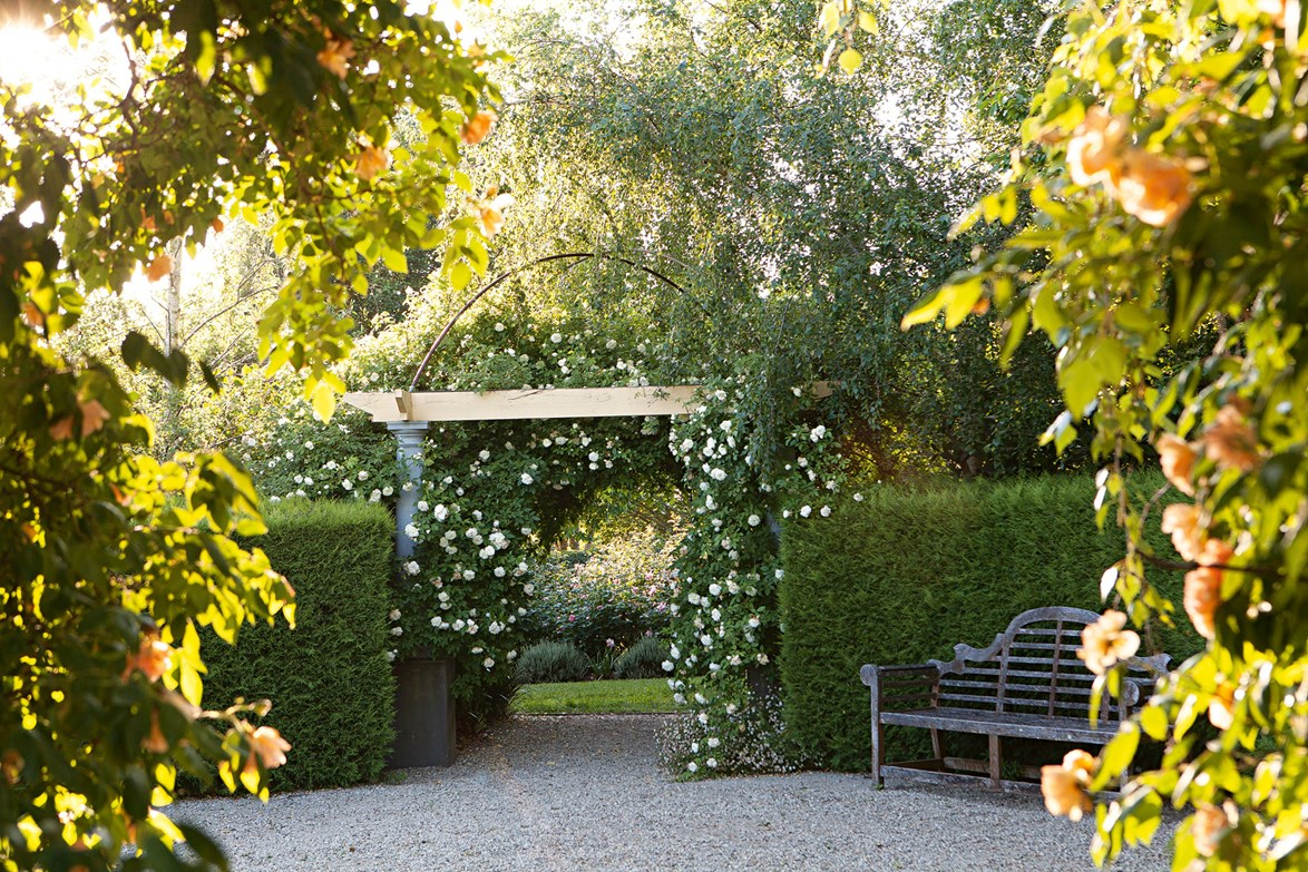 """'Le Marc' climbing roses rise up over an arch in a [tiered sloped garden](https://www.homestolove.com.au/tiered-slope-garden-13887
