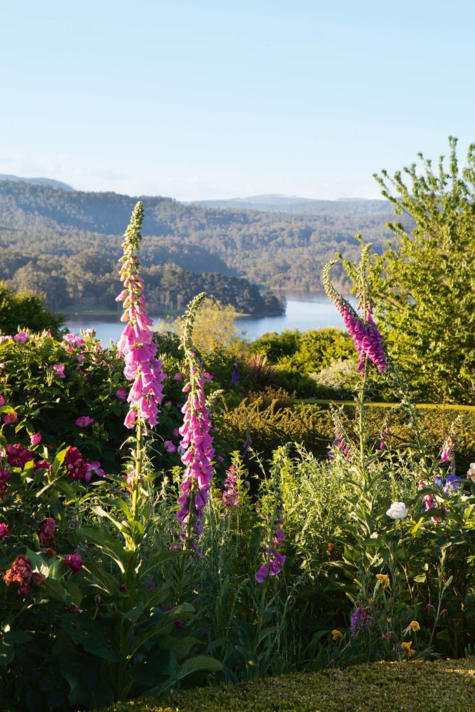 Hedging is the perfect foil for plantings. On the top level, David has cleverly planted a bank of low shrubs, including many evergreens, but has kept the vista paramount, while further down the slope, the view of the water and paddocks is glimpsed through the roses and trees. The shrubs also create a green barrier of interest in winter when the roses aren't in flower.