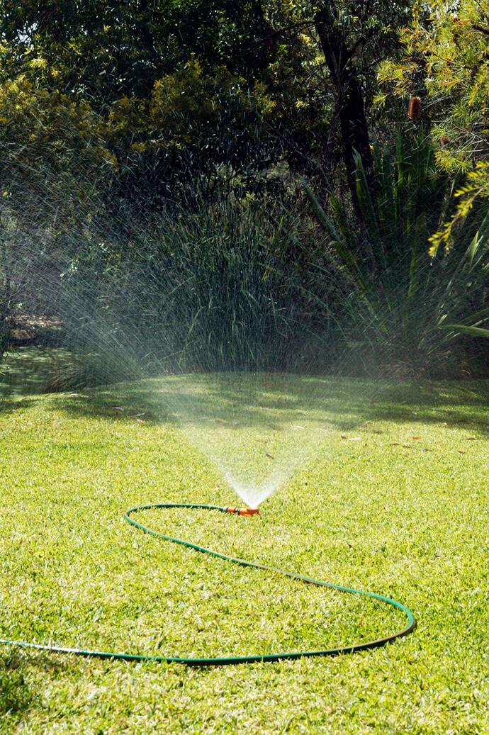 The experts agree that watering deeply up to three times a week will produce better results than light sprinkles daily.