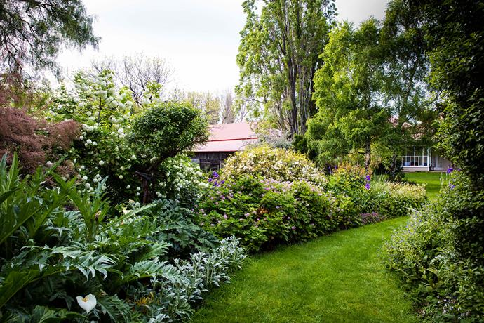 Acanthus, artichoke, snowball tree, spiraea (May bush), the occasional pink-flowering geranium, and groundcovers line the meandering paths that link lawn areas.