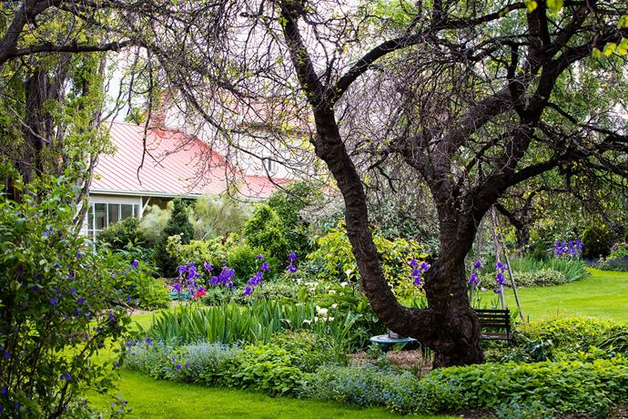 The ancient mulberry tree shades mounds of groundcovers and swathes of irises and lilies.