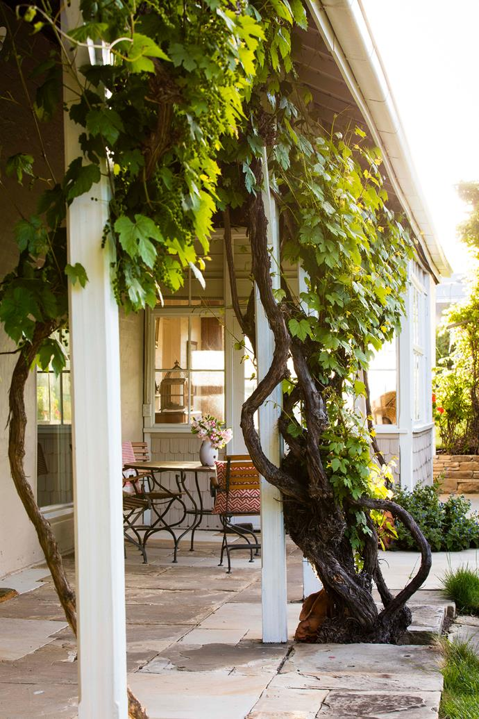 The ornamental grapevine growing along the front verandah is almost as old as the 200-year-old house.