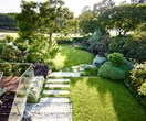 Expert Buffalo lawn care tips for Australian gardens