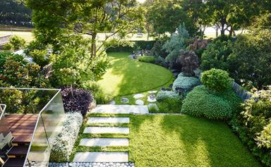 Expert Buffalo lawn care tips for Australian gardens