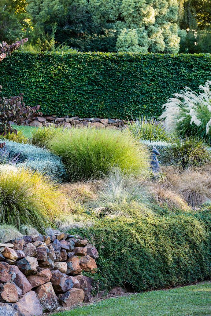 """**PURCHASE SMALL, FAST GROWING PLANTS**<p> <p>This simple tip will benefit every Australian looking to make the most of their garden. Using small plants is particularly ideal for large blocks. Buy them in tubes of 100mm pots and you can cover more ground within your budget. [Ornamental grasses](https://www.homestolove.com.au/ornamental-grasses-australia-19276