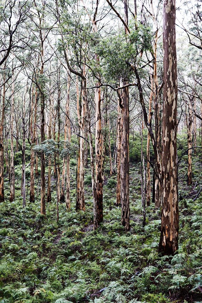 Boranup Karri Forest.