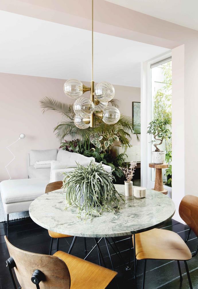 **On table** Mistletoe cactus or rhipsalis (*Rhipsalis cassutha*). **On pedestal** Bonsai fig tree or weeping fig (*Ficus benjamina*). **Rear wall** (behind pendant light) Kentia palm (*Howea forsteriana*).