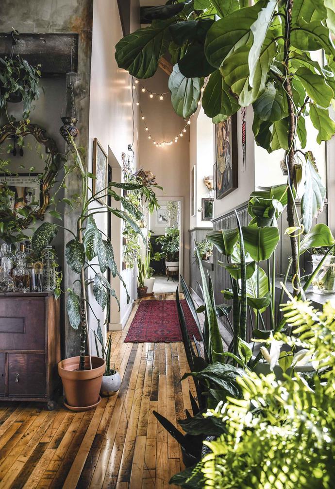 *Clockwise from left* Dieffenbachia (*Dieffenbachia seguine*), African spear (*Sansevieria cylindrica*), staghorn fern (*Platycerium bifurcatum*), bird-of-paradise (*Strelitzia nicolai*), and snake plant or mother-in-law's tongue (*Sansevieria trifasciata*).
