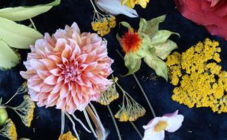 Autumn flowers australia