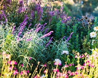 winter flowers australia