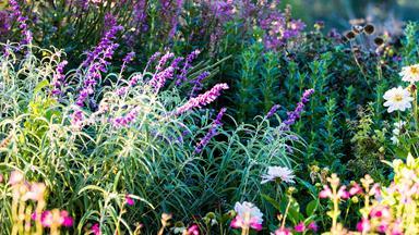 11 beautiful flowers for Australian winter gardens