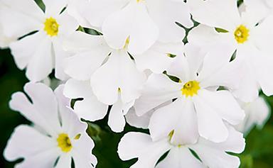 12 best winter flowers