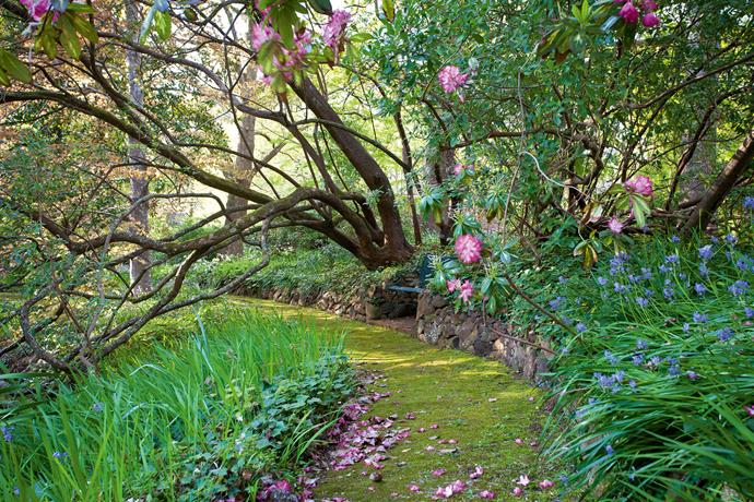 """This woodland garden has a unique place in Australian gardening,"" she says. ""To wander its meandering paths is to be transported by its beauty and the peacefulness of a bygone age."" It reflects, too, the contemporary aesthetic of [woodland gardening](https://www.homestolove.com.au/garden-design-styles-19942